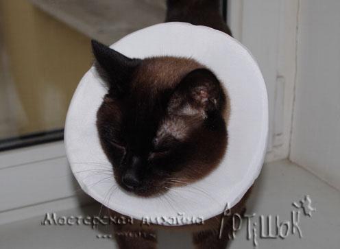 Делаем защитный елизаветинский воротник для кошки своими